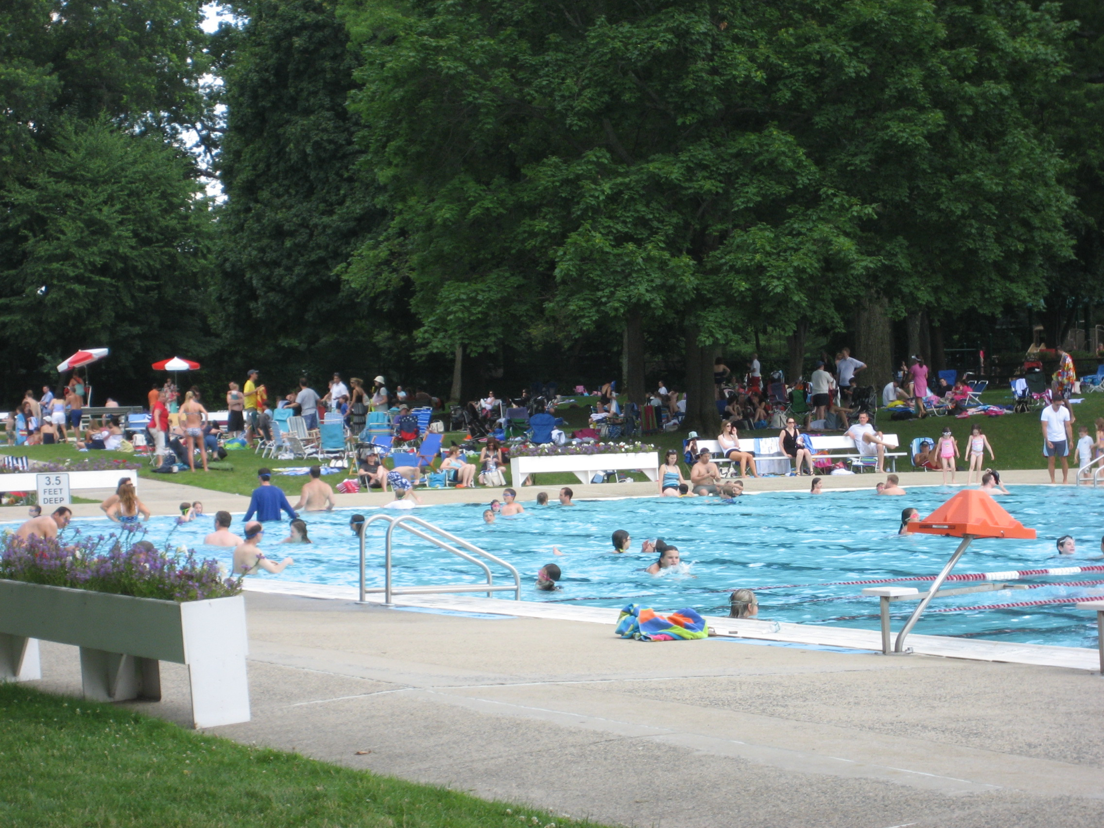 Swimming Around Westchester Scarsdale On My Mind